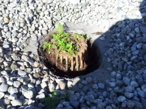 plant clogging roof drain