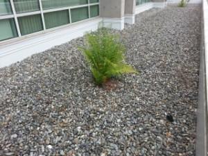 roof drain vegetain