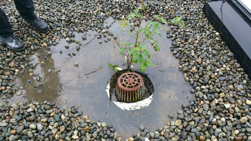 plant growing out of roof drain